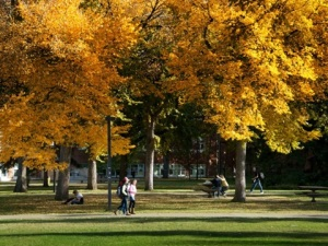 ualberta-wallpaper05-fall-campus-640